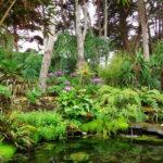 Vue botanique de l'Ile de Batz